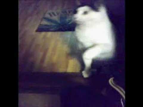 猫vs梵天