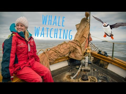 WHALES, DOLPHINS & PUFFINS!!! | Husavik, Iceland