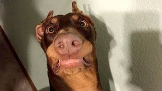 Funny dogs never fail to make you happy and smile - Funny dog compilation