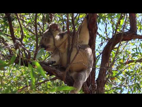 Road Trip-Brisbane to Cairns