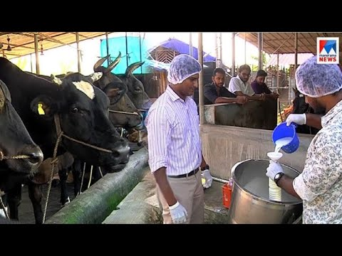 Profitable Cattle Farming by youngsters from Ernakulam    Manikilukkam
