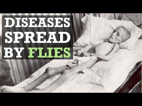 5 Dangerous Diseases Spread by Flies