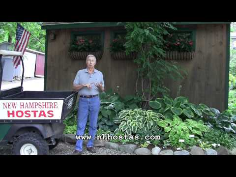 How To Keep Slugs & Snails Out Of Your Hosta Garden