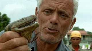 Never Catch an Anaconda with Your Bare Hands | River Monsters