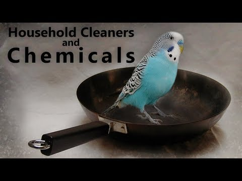 Budgies | Household Cleaners and Chemicals