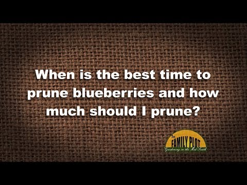 Q&A – When should I prune blueberries and how much?