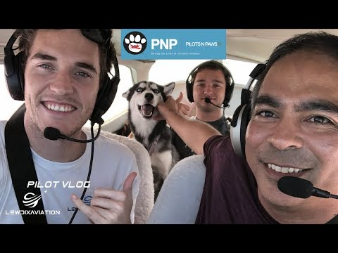 Flying Dogs To New Homes| Pilots N Paws Flights| Pilot Vlog