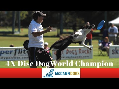 Disc Dog Training Vault Tricks