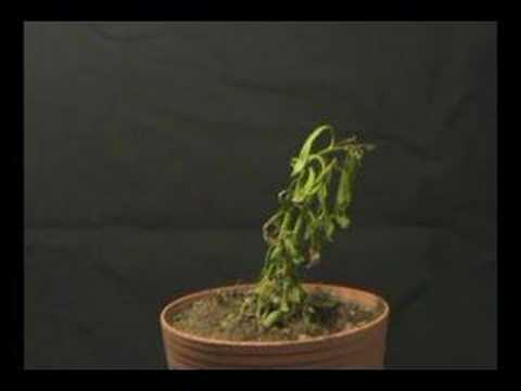 Plant dying time lapse
