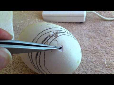 After Internal Pip (safety holes) Goose Egg