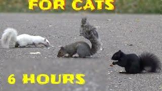Vídeos entretenimiento para gatos y perros para ver,