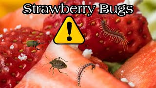 Strawberry Bugs Test You Will Not Believe that Exists ⚠️