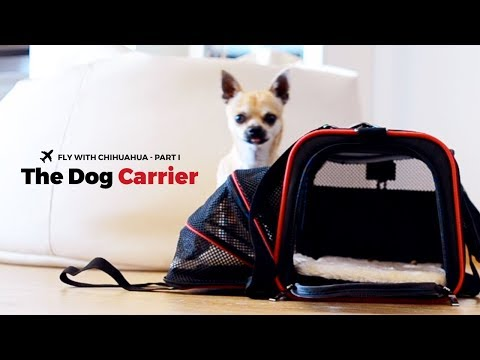 Fly with Chihuahua - Part I: The Dog Carrier