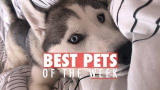 Best Pets of the Week   October 2017 Week 2