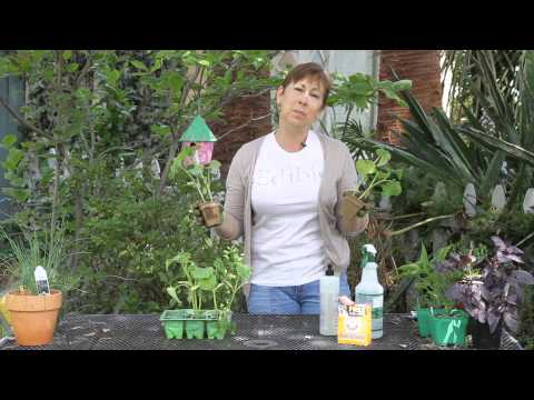 Homemade Remedy for Mildew on Cucumber Plants : Garden Space