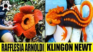 Top 10 Most Extraordinary Jungle Discoveries