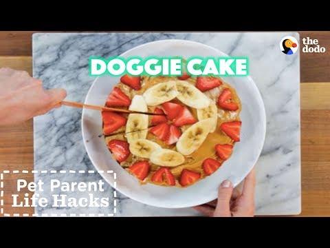 Easy Dog Cake Recipe for Any Special Occasion | The Dodo Pet Parent Hacks