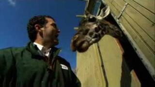 RMR: A Trip to the Toronto Zoo