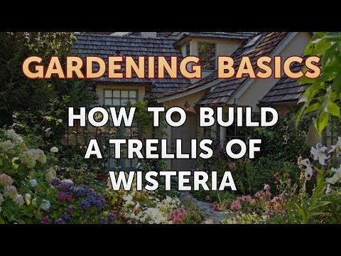 How to Build a Trellis of Wisteria