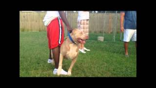 blue fawn kennels Videos - 9tube tv