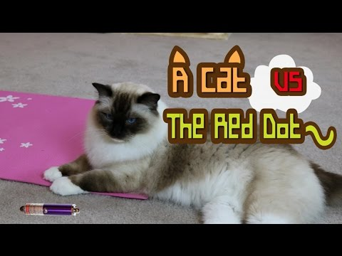 A Cat vs A Laser Pointer