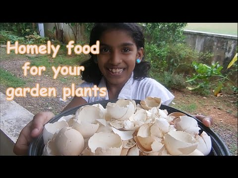 My home gardening - Homely food for healthy/flowering plants