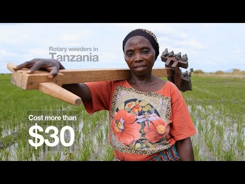 Rice Weeding in Tanzania: Innovations from the Field