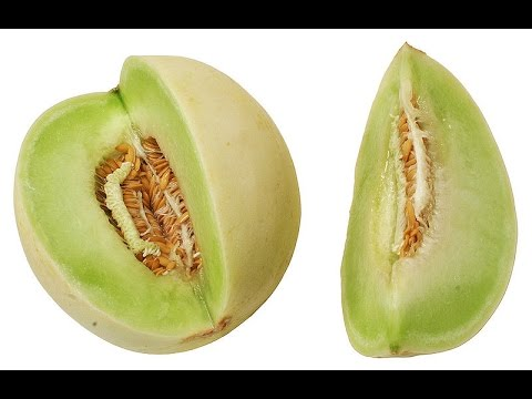 How to Start Honeydew Melon Seedlings Indoors: Kitchen Gardening with Kimberly