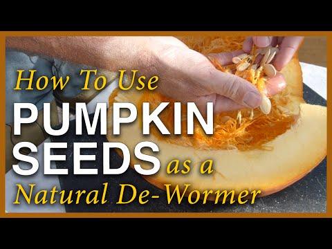 Pumpkin Season - Using The Seeds As A Dewormer