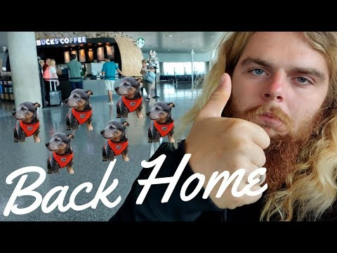 Traveling with my Puppy back to Puerto Rico || Vlog #156 of 365