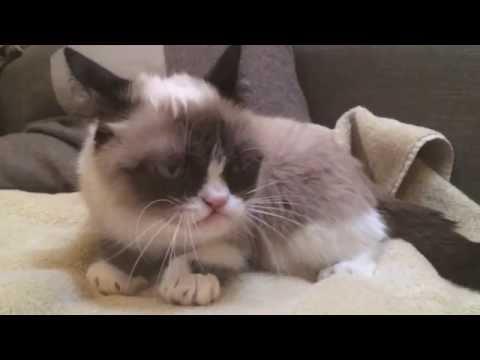Grumpy Cat In Slow Motion!