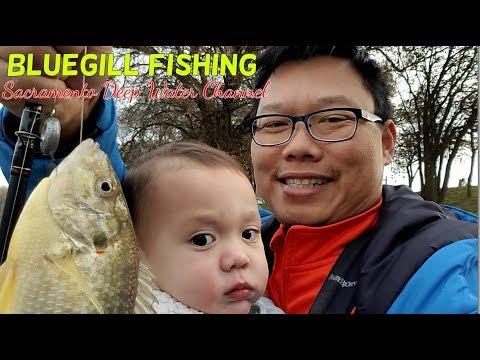 Winter Bluegill Fishing at the Sacramento Deep Water Channel