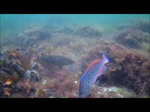 Testing saltwater bait
