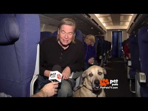 Flying With Your Dog: What You Need to Know