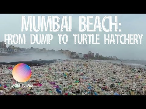 Sea turtles return to nest on beach that was once a plastic trash wasteland
