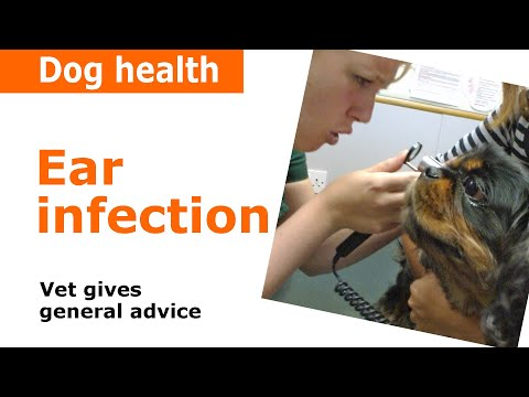 Dog Ear Infections - Vet Advice