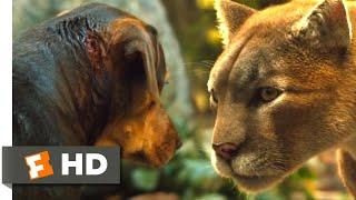 A Dog's Way Home (2018) - Big Kitten Returns Scene (7/10)   Movieclips