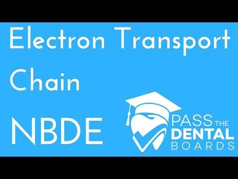 Electron Transport Chain - Oxidative Phosphorylation - Biochemistry - NBDE