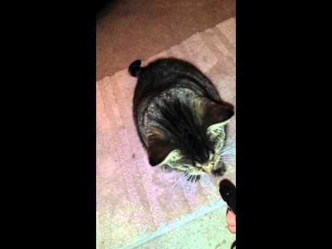 Cat loves squirt bottle