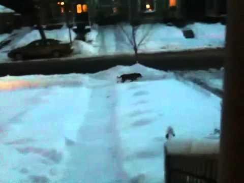 Get That Dog Off My Lawn! - @pharaoh8