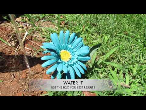 How to plant a flower