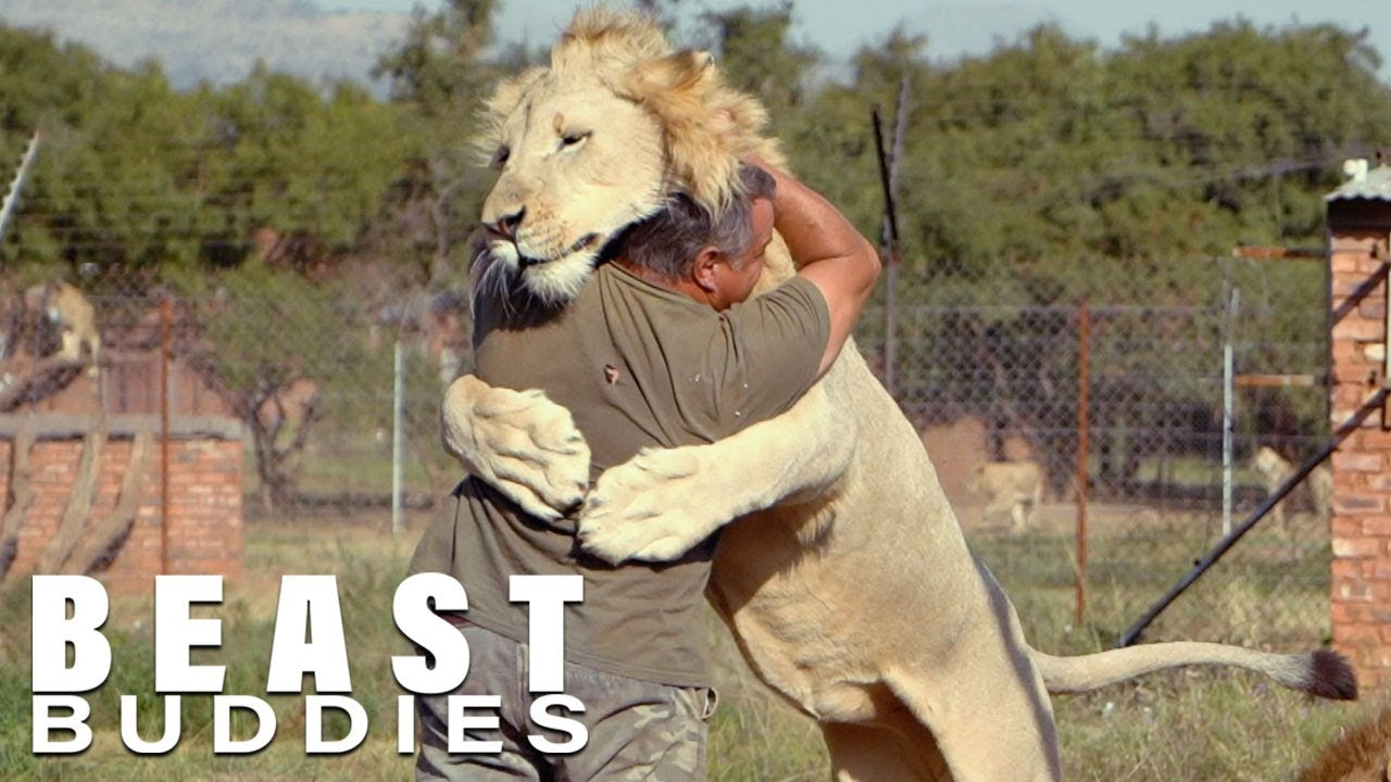 The Man Who Cuddles Lions | BEAST BUDDIES