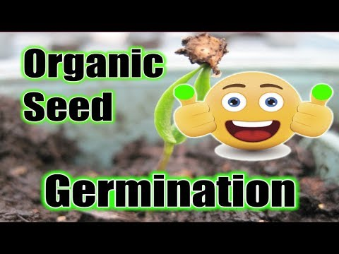 Best TIP for Organic Seeds Germination Become a GREEN THUMB Grow Seeds Fast (SUPERCHARGED)