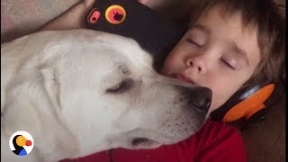 boy with autism gets dog who changes his life the dodo