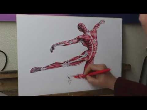 Pen Drawing Human Anatomy