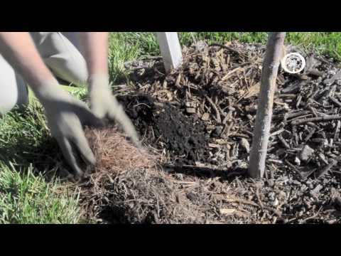 Ask an Arborist: Why do we Mulch?