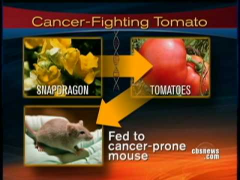 Can Tomatoes Cure Cancer?