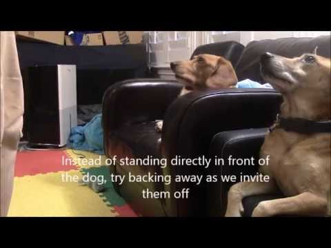 Asking dogs to get off the sofa