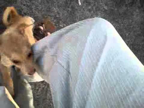 Xxx Mp4 Dog Video 3gp 3gp Sex