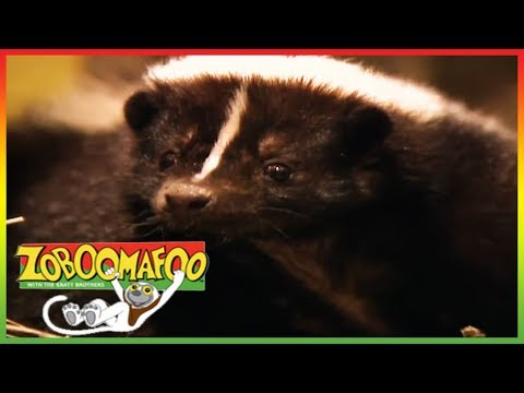 🐵🐒 Zoboomafoo 139 | Stinky | Animal shows for kids | Full Episode | HD 🐵🐒